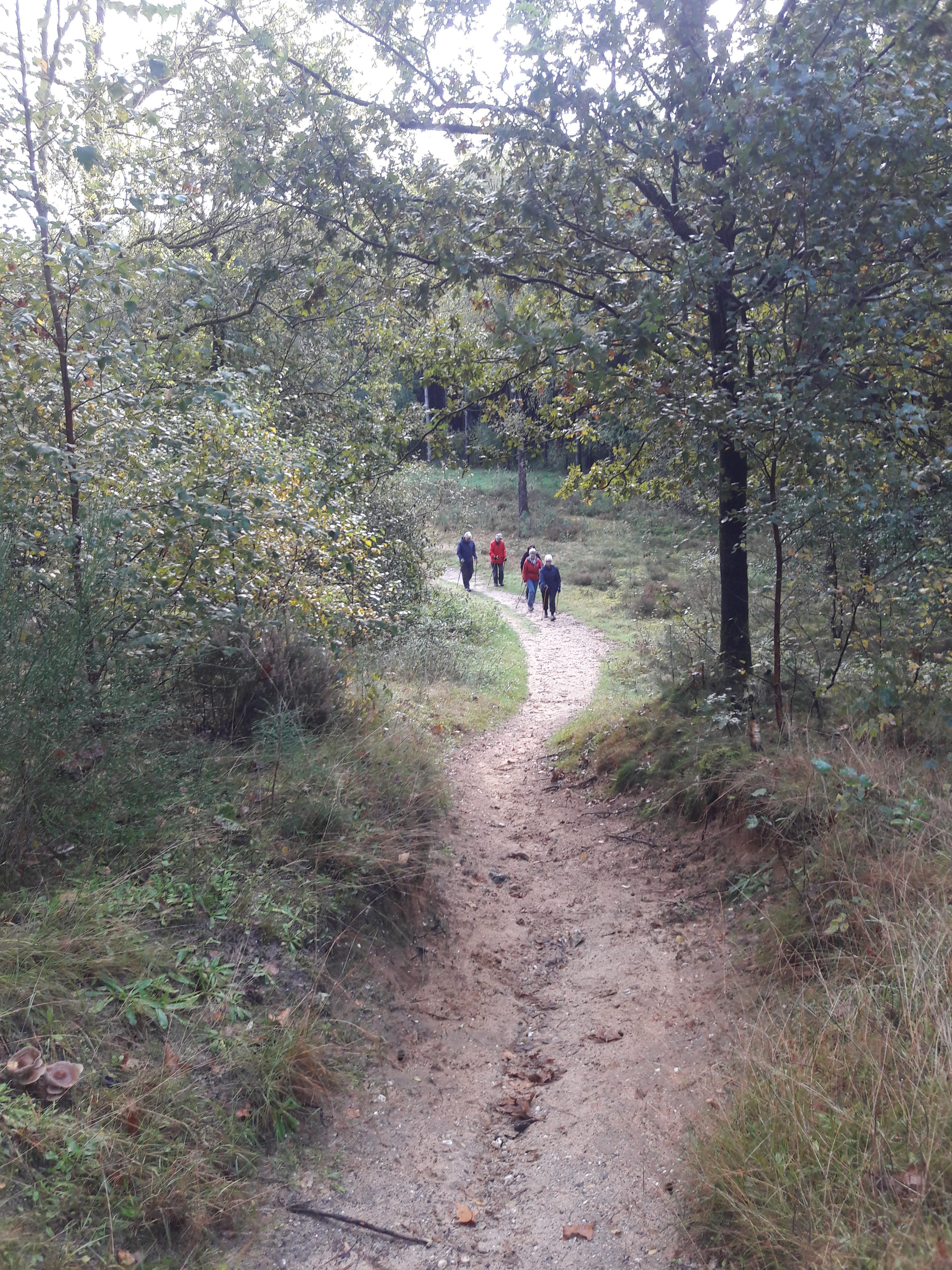 Nordic Walking Losse groepstochten